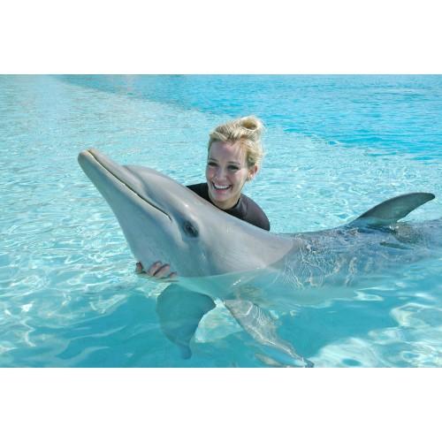 Плавание с дельфинами в Москвариуме (Москва)
